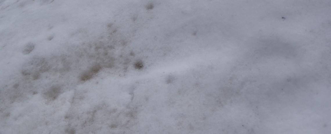 Weißer Schnee vor der Tür