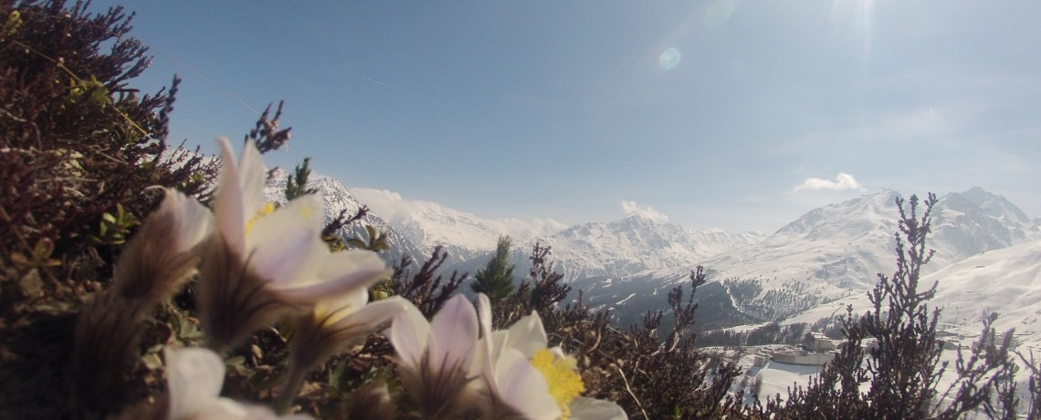 Winterurlaub im Hotel Alpenfriede