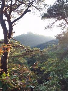 Umgeben von Wäldern