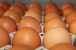 Eier von Ötztaler Hühnern